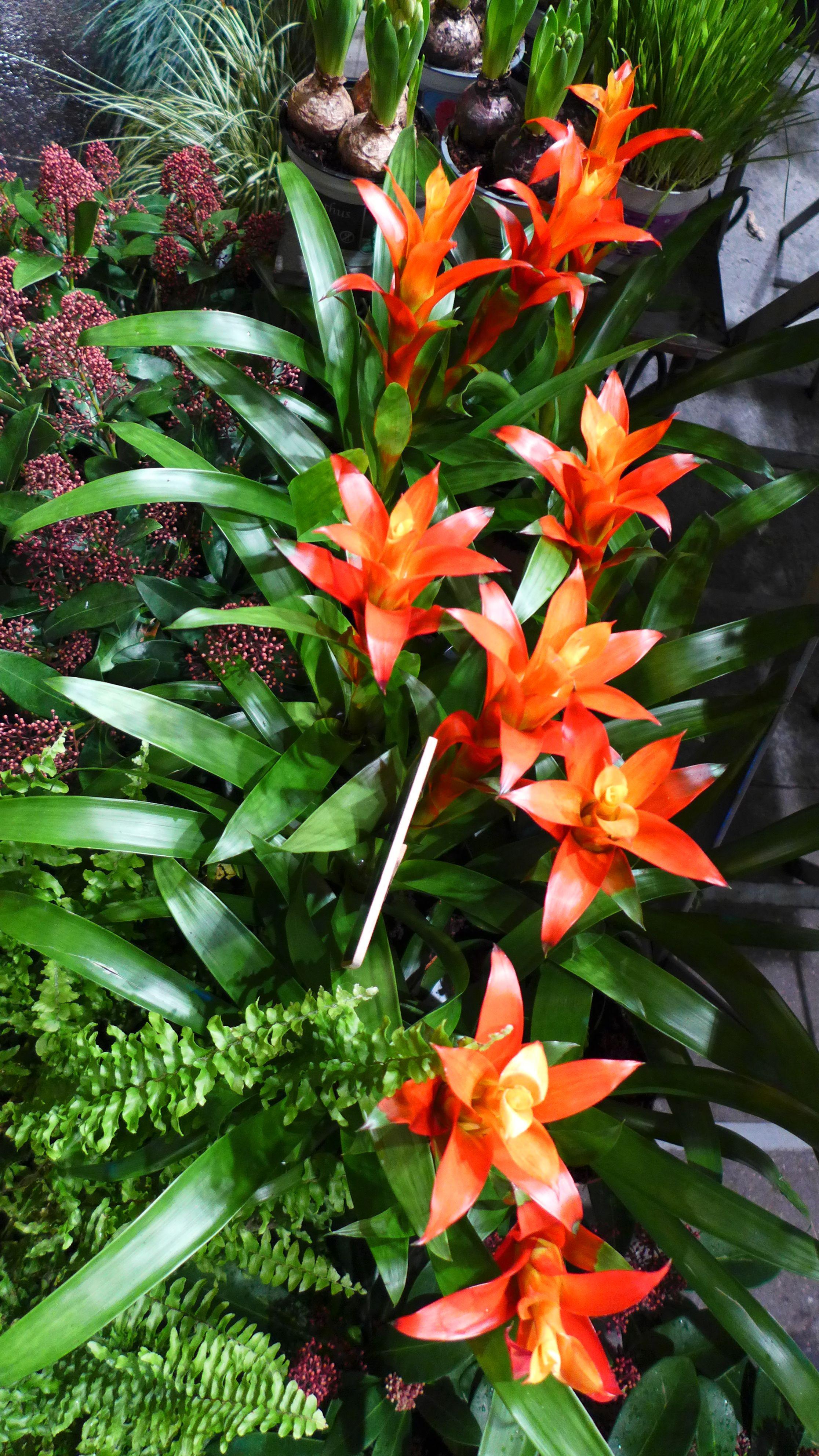 Bromelia Dans La Vitrine Aquarelle Convite Garden Boutique E