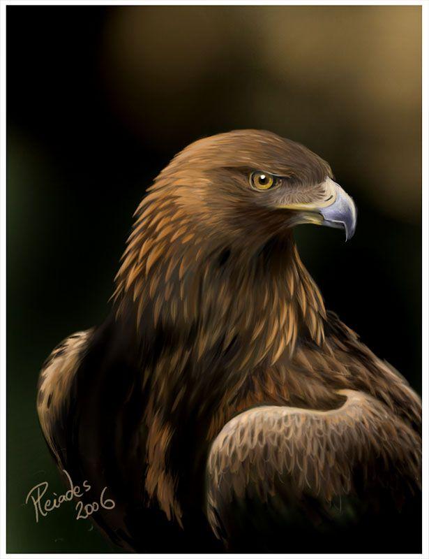 Eagle painting in sunstream golden eagle wallpaper for Gold bird wallpaper