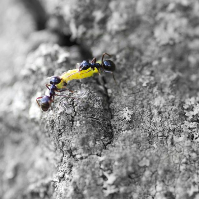 Ant fight, mooi toch