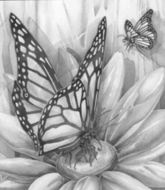 Butterfly Coloring pages colouring adult detailed advanced printable ...