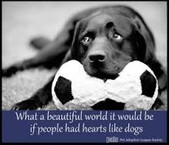 quotes about dogs loyalty - Google zoeken