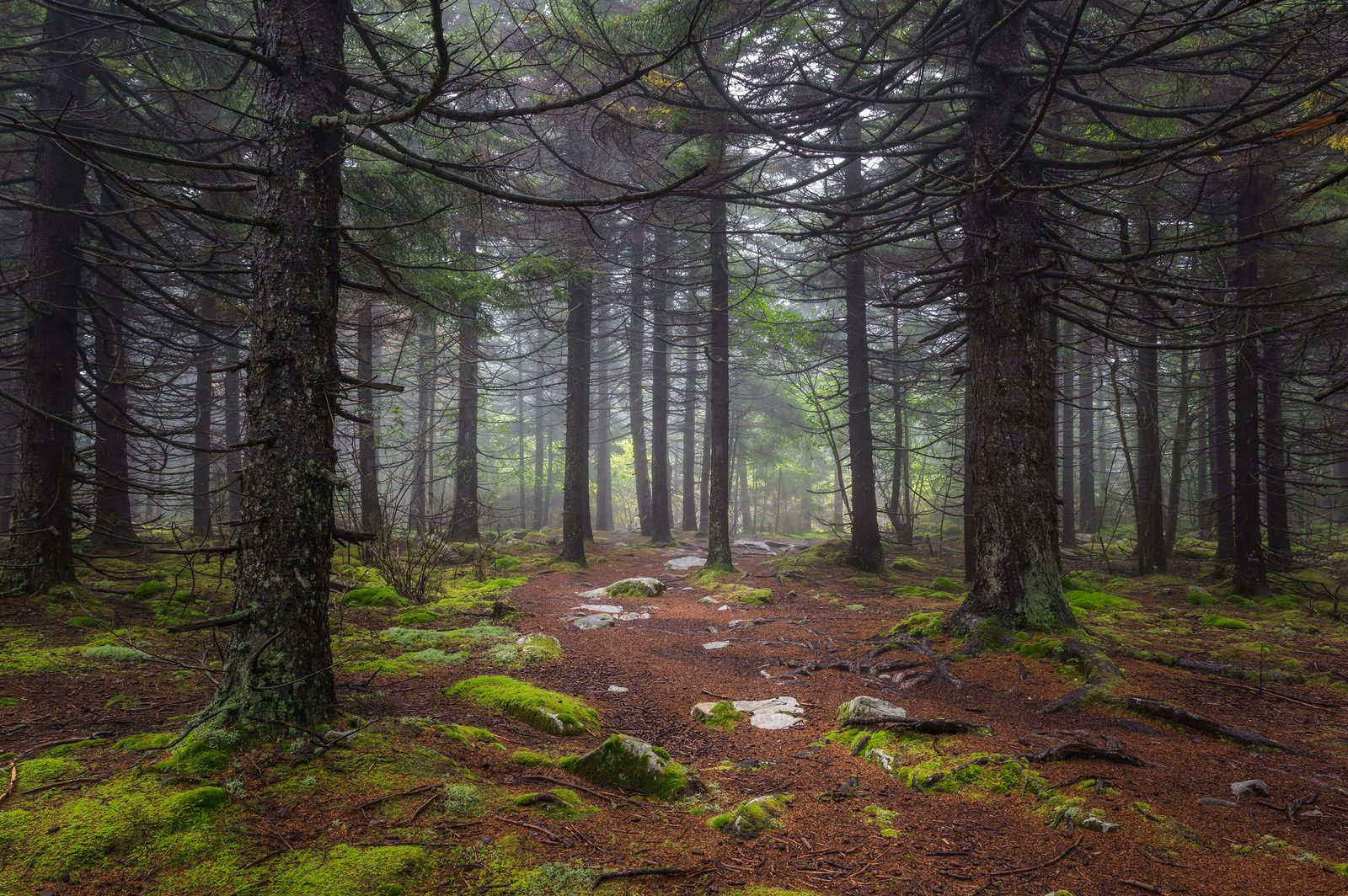 The Majestic Green - Spruce Knob, West Virginia | by reflectioninapool