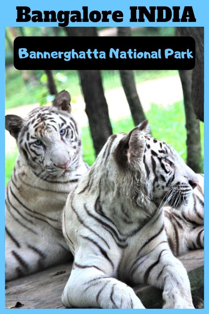 Bannerghatta Zoo & National Park, Bangalore, India