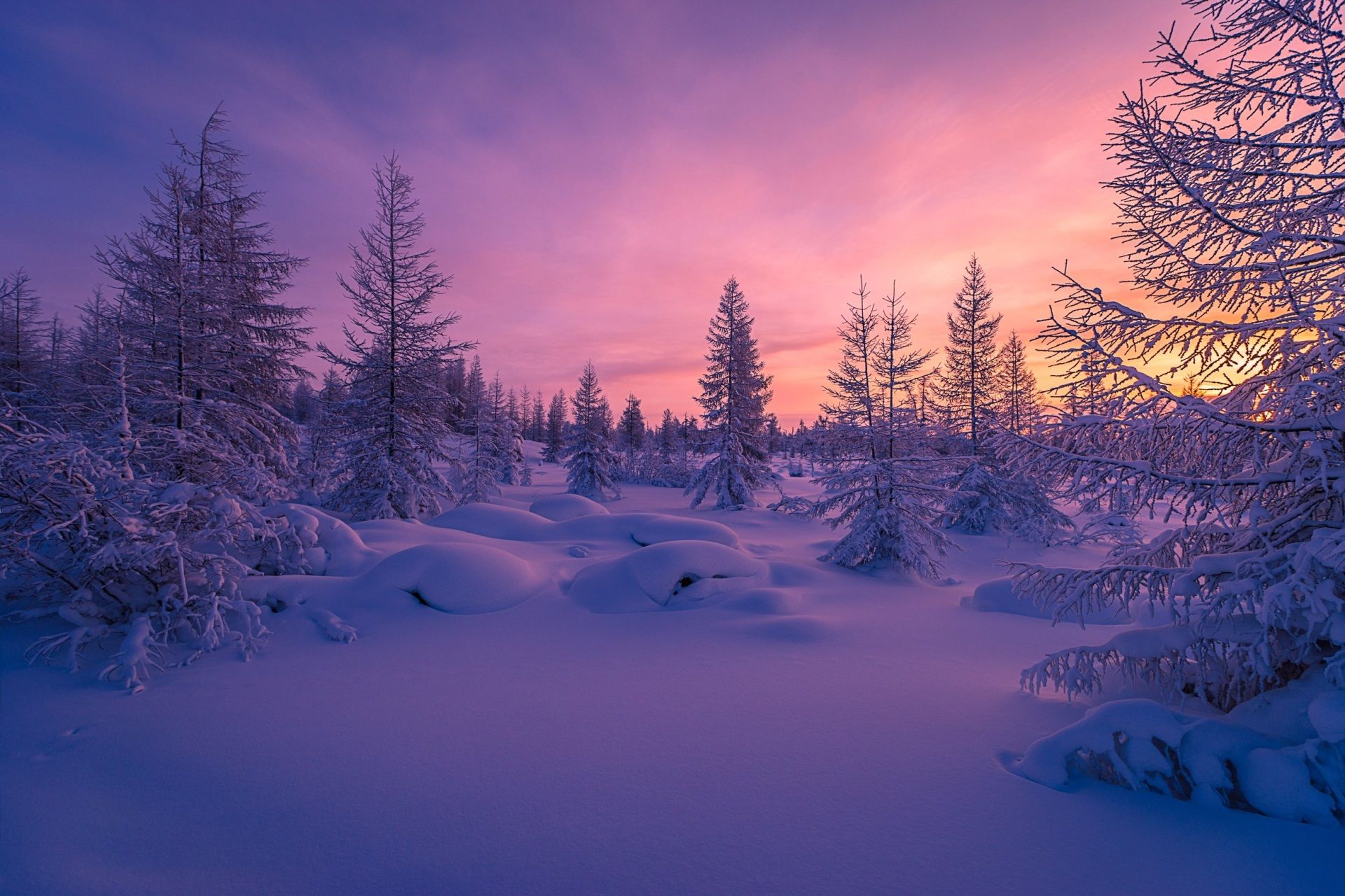 1920x1280 Winter Forest Download Wallpapers For Pc Winter Landscape Winter Forest Landscape Wallpaper