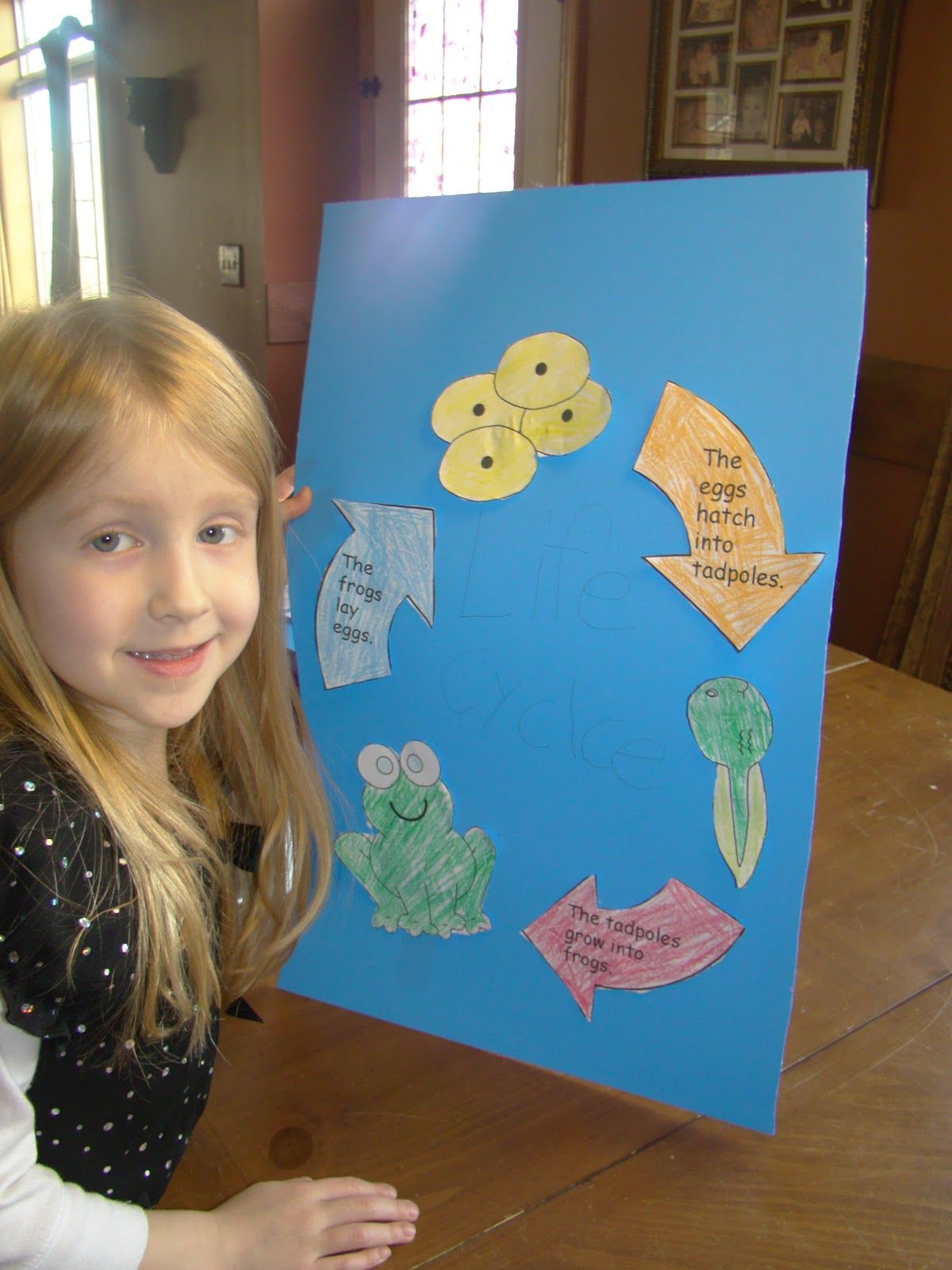 Life Cycle Of The Frog Crafts For Kids