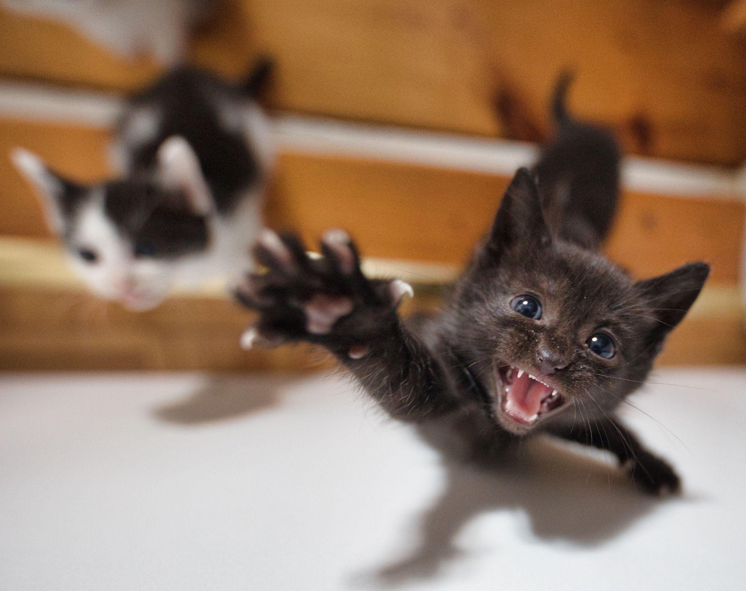 Angry Kitten By Per Eisele Kitten Feline Kitty