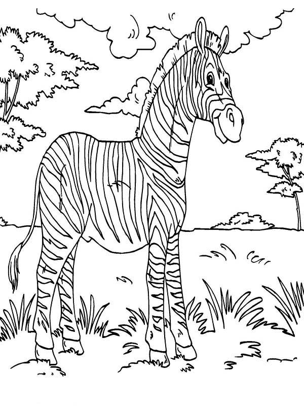 Zebra Rainforest Animals Coloring Page Download Print Online Coloring Pages For Free Co Animal Coloring Pages Pattern Coloring Pages Zebra Coloring Pages