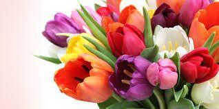 tulipas coloridos