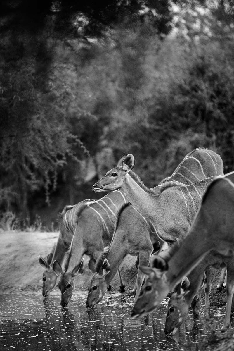 08Mike Palmer - Kudu 130616 Visit SA: http://www.savisas.com/south-africa-visa/