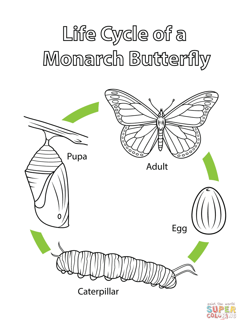 Life Cycle Of A Monarch Butterfly Coloring Page From Category Select 27569 Printable