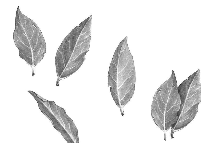 Bay leafs black white illustration in 2020 black and