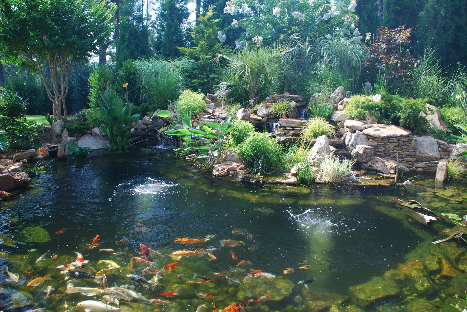 Koi pond splendor koi pond koi ponds require for Koi ponds and gardens