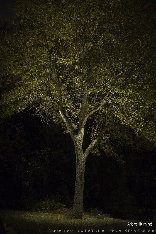 Well Lit Ash Tree Frene Mis En Lumiere Lumieres Dans Les Arbres Eclairage De Jardin Eclairage Exterieur
