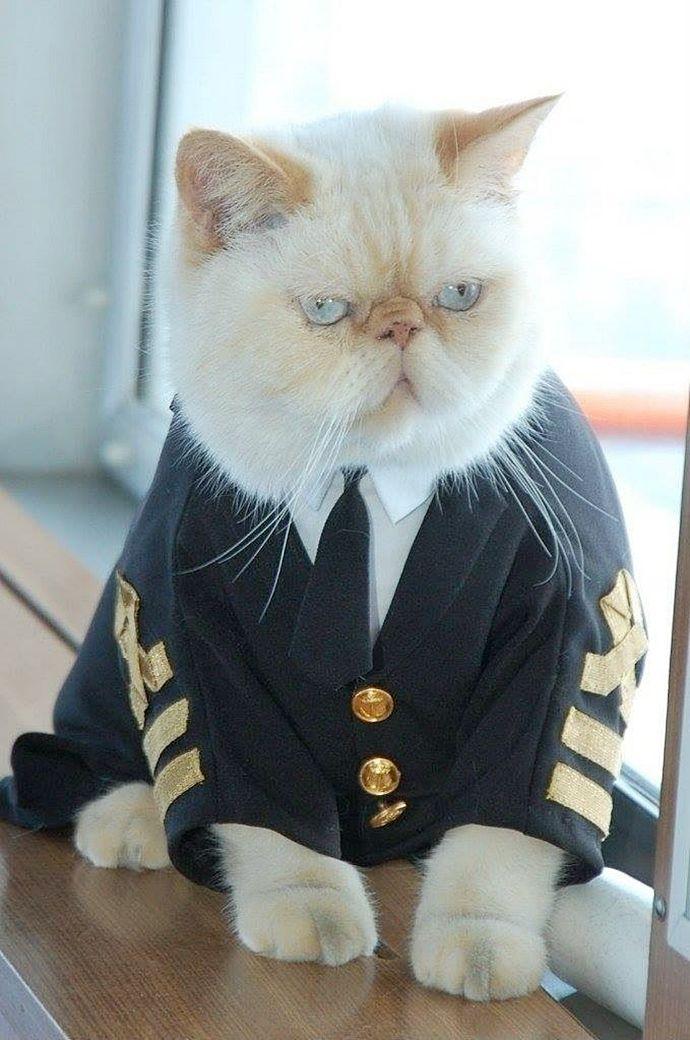 картинки котят в морской форме