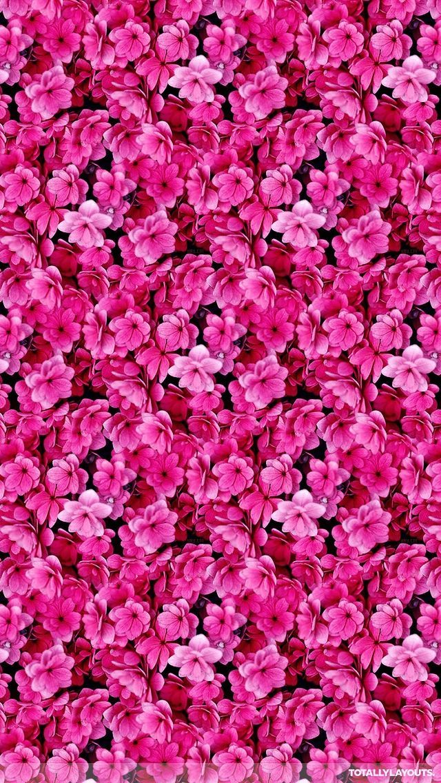 Pink, Petal, Flower, Plant, Lilac, Magenta (With images