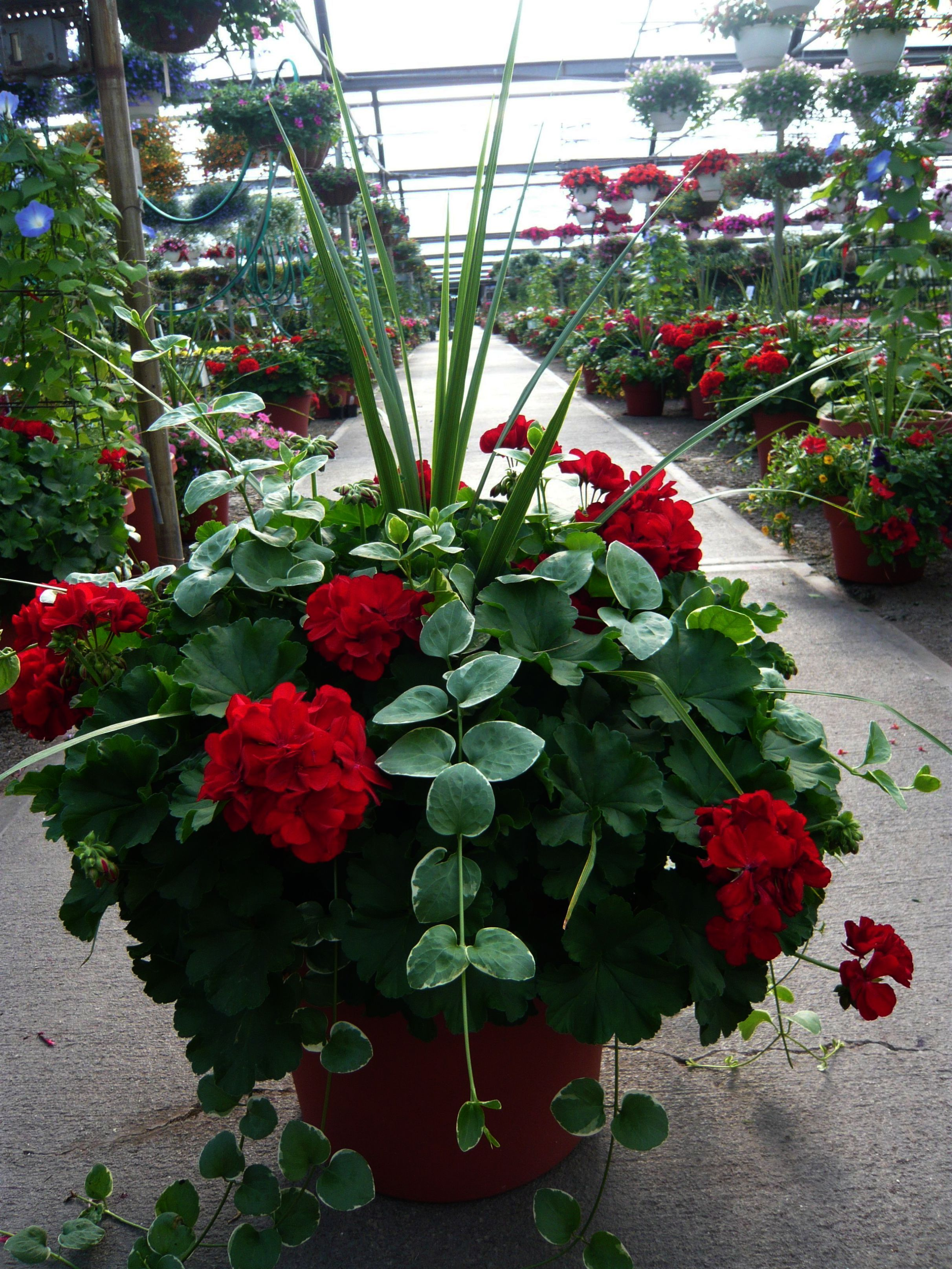 Flower Containers For Full Sun; Container Gardening For ...