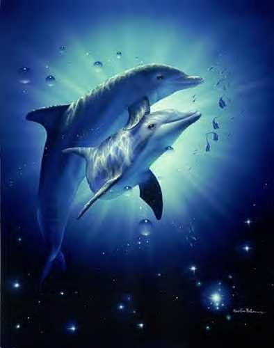 Magnifique Image Dauphin Dauphin Animaux Orques