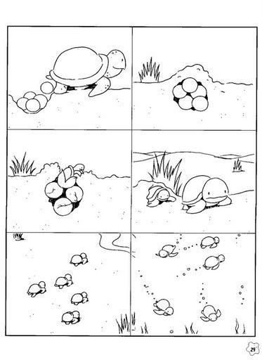 taal, taaldenken, logische reeksen.  taal, pragmatiek/integratie, stripverhaal.  thema: dieren, schildpad.