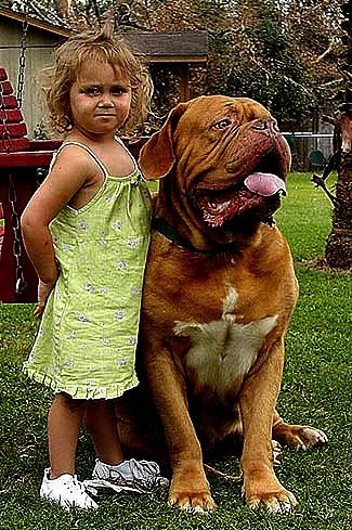 A little girl is standing next to a sitting Razz the Dogue