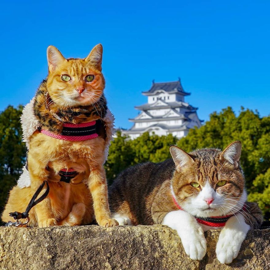 This Man Travels All Over Japan With His Two Kittens And