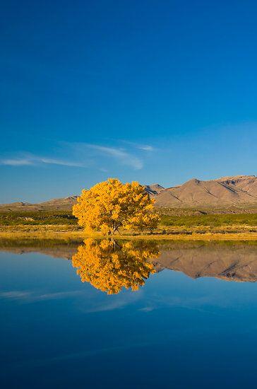 Bosque de Apache National Wildlife Refuge. Socorro, New Mexico.