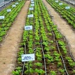 How to grow vegetables - Farming Tips for Beginners