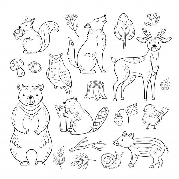 Doodle Forest Animals Woodland Cute Baby Animal Squirrel Wolf Owl Bear Deer Snail Childrens Sketch Hand Drawn Set Animal Doodles Forest Animals Bear Sketch