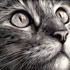 image result for how to draw realistic cats cat eyes in 2018