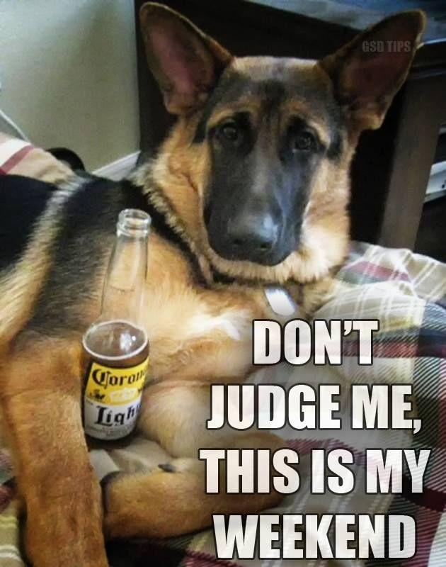 German Shepherd Strong And Loyal Funny Animal Pictures German