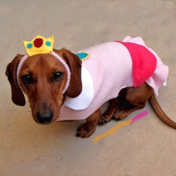 Forkparty Com Dog Costumes Dog Halloween Costumes Puppy Costume
