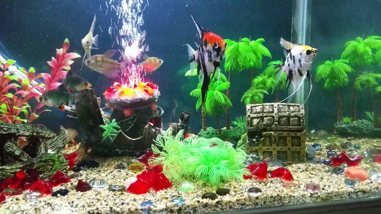 Official Site Of Easypets In Provides Tropical Tank Decoration In India Shop Online At Easypets Fo Fish Tank Decorations Fish Tank Accessories Small Fish Tanks