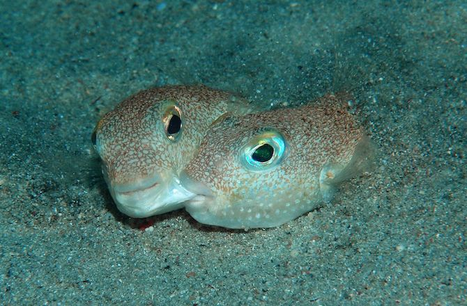 Craziest New Animal Species of 2015: Photos : Discovery News