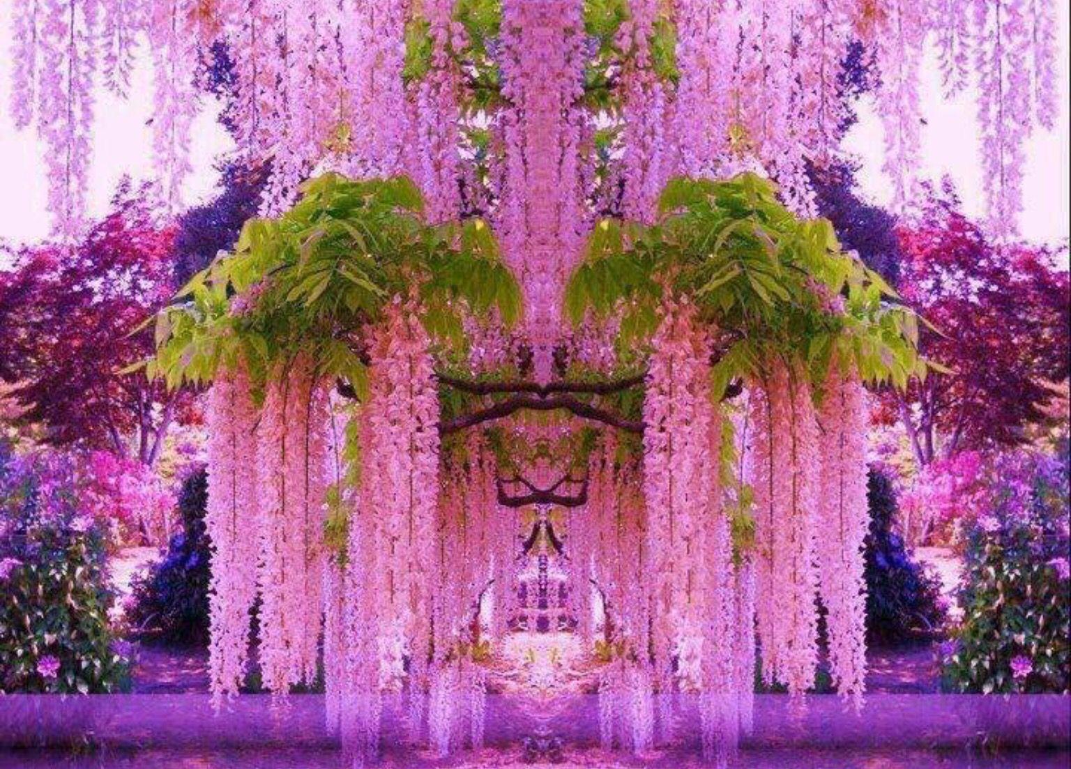 Purple Wisteria Tokyo Japan Splendidi Giardini Bellissimi Fiori Idee Immagine