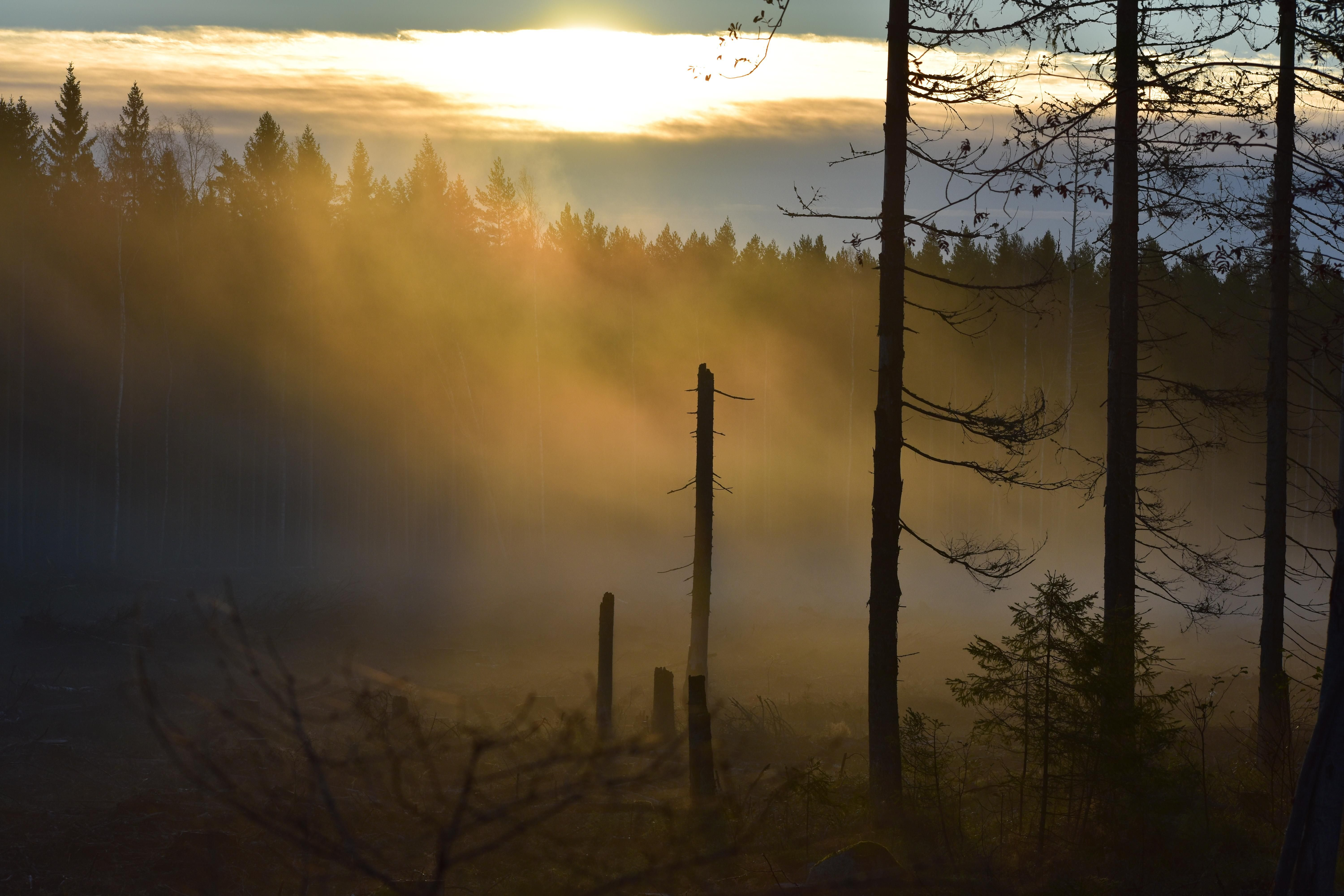 Mysterious Sunrise In The Woods In Varmland Sweden Oc 60004000 Amazing Beautiful Photograph Landscape Photography Nature Photography Landscape
