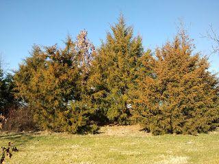 1c013890ceafe1d76f15b6a31bcd197d - Red Cedar Gardens Overland Park Ks