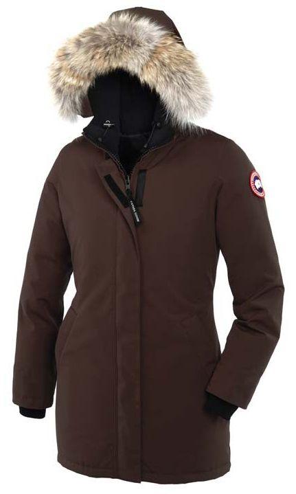canada goose brown
