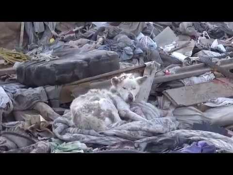 Lixo esconde cachorro abandonado mas o que acontece a seguir vai deixar ...