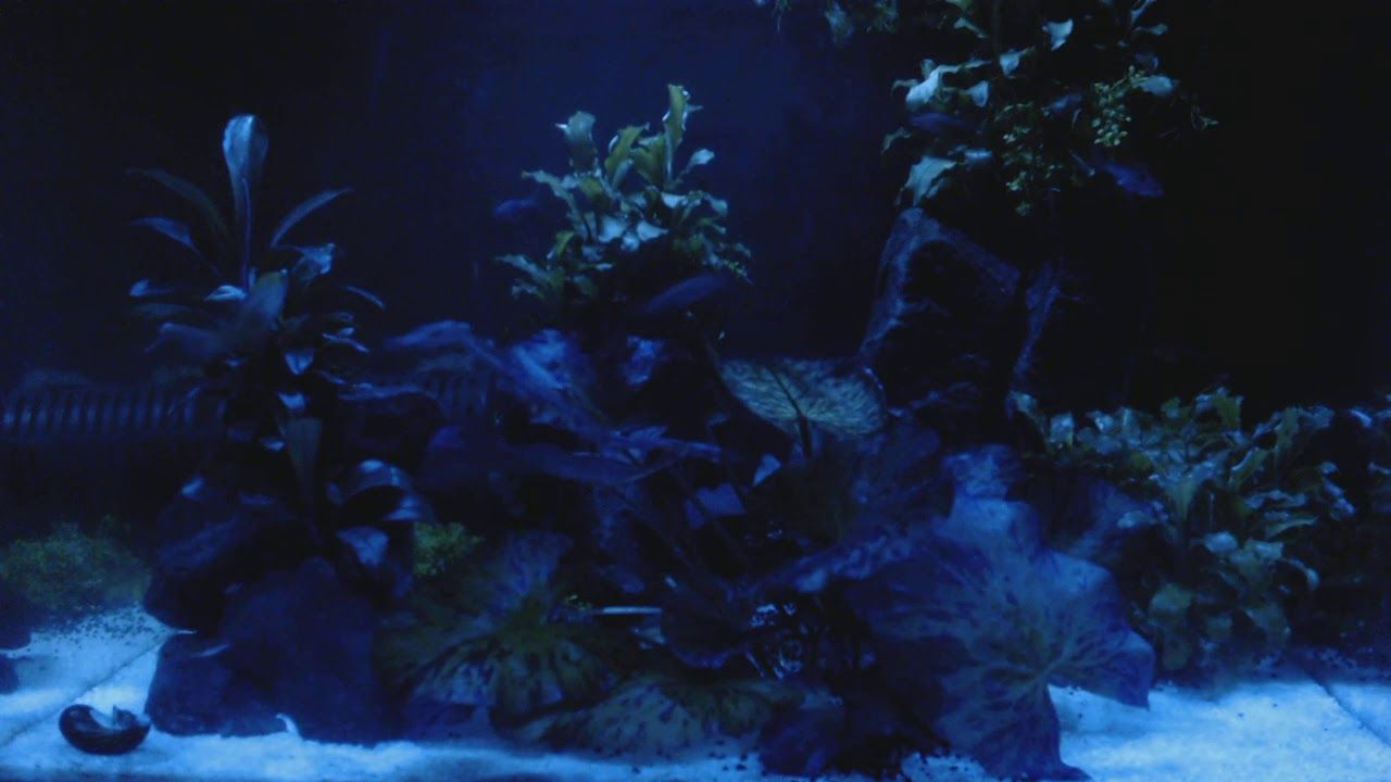 Aquariums Zff Aquarium Color In 2020 Aquarium Color Appearance