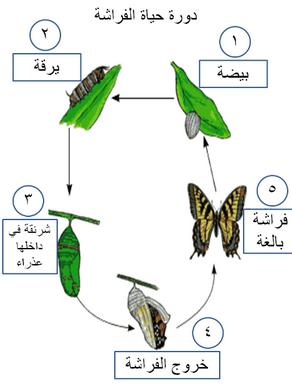 مدونة الحضانة أنشطه على أيام الاسبوع من سنة إلى خمس سنوات بالصور Days Of The Week Learning Arabic Arabic Kids Arabic Language