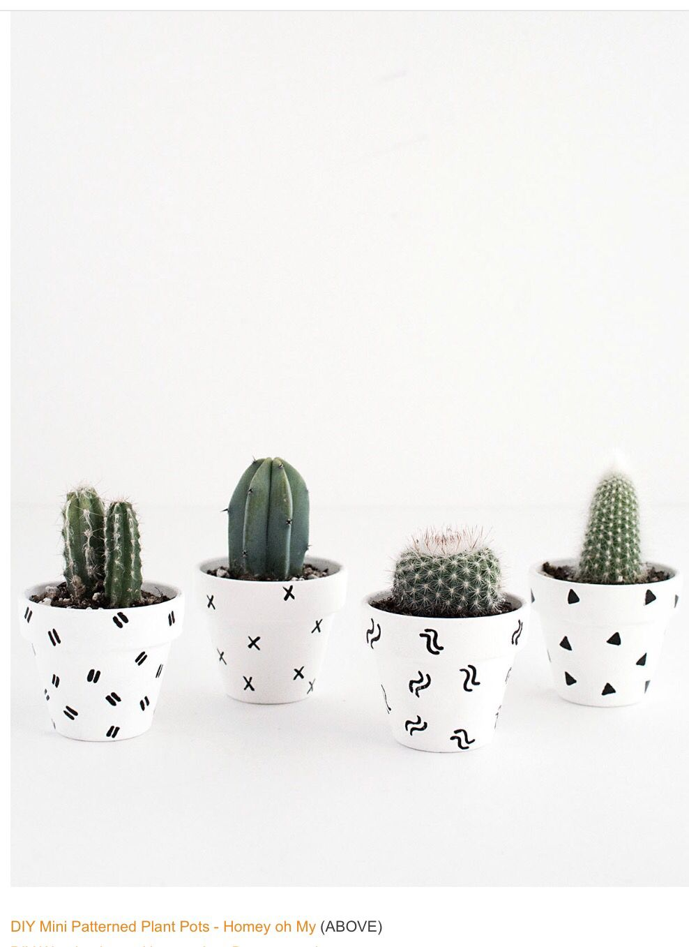 Cute Succulents In Black White Planters Things That I Just