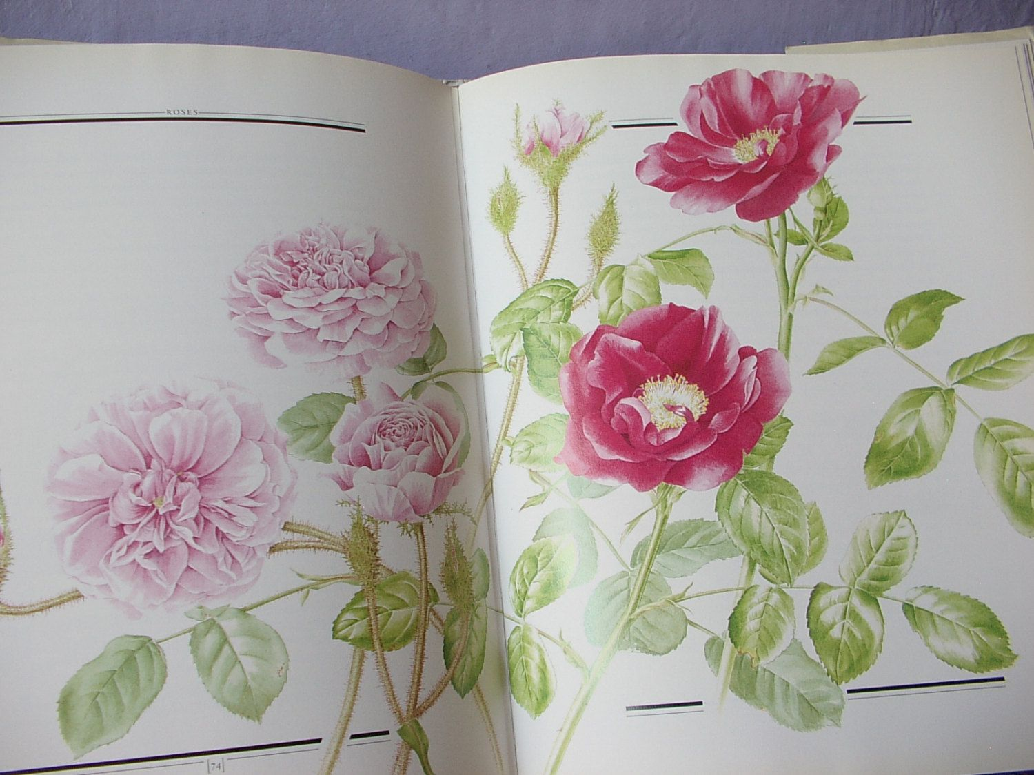 Vintage A Year in a Victorian Garden book by Henry A. Bright, 1989, Illustrated book, Victorian Flower book, English garden, rose book by ShoponSherman on Etsy