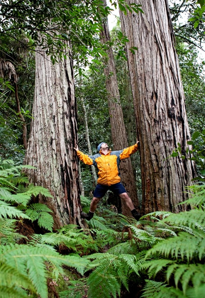 You can conquer the trees in Strickland State Forest, NSW, Australia. Photo: Andrea Buschner for Forests NSW.
