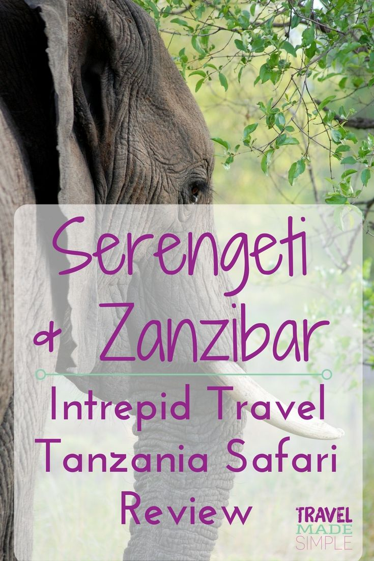Serengeti and Zanzibar Tanzania Safari Tour Review is part of Serengeti Safari To Zanzibar By G Adventures With  Tour - This is part of a series of interviews with inspiring travelers  Today's interview comes from Dalene Heck about her Tanzania safari tour  See more about tours and tour reviews here  All photos are by Dalene and Pete Heck, except Pinterest image  Tell us about yourself and your travel experience  My name is Dalene and I […]