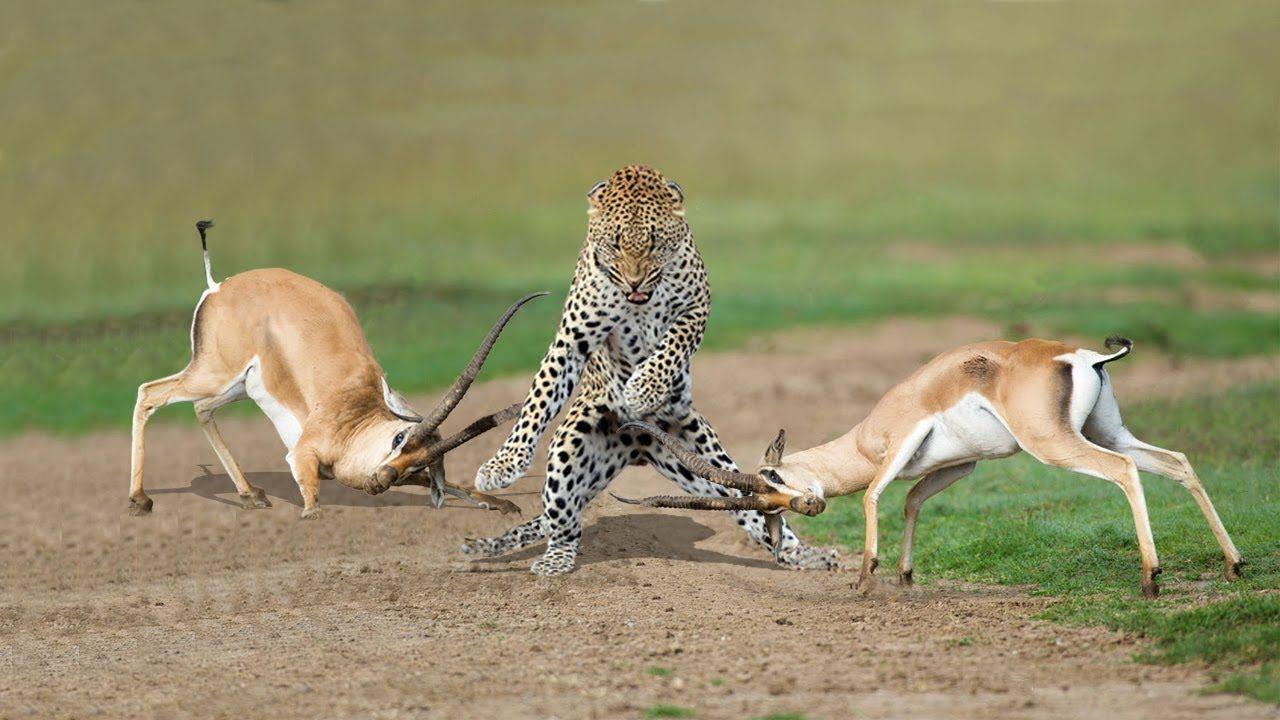 Картинки с нападением животных