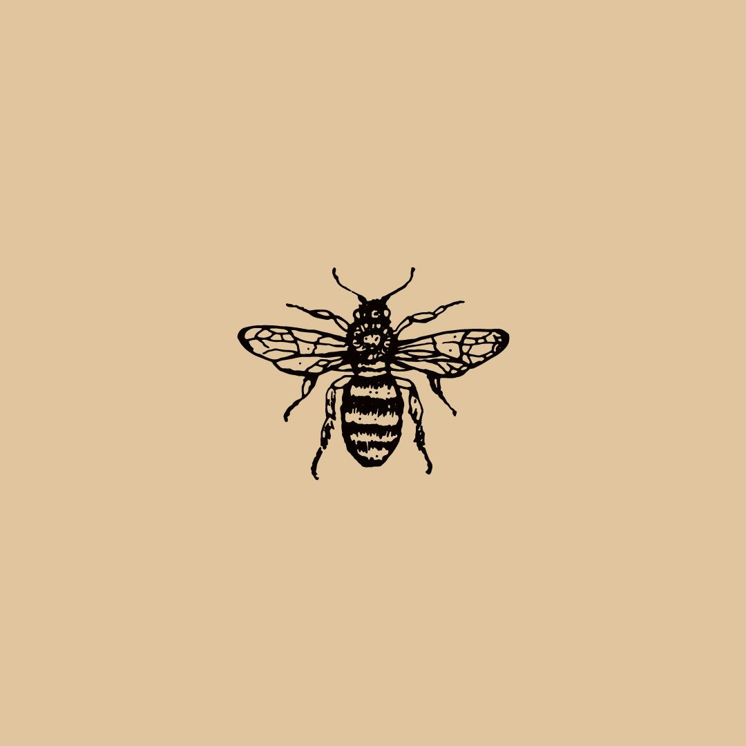 Bee Illustration//Icon//Design//Branding//Braizen