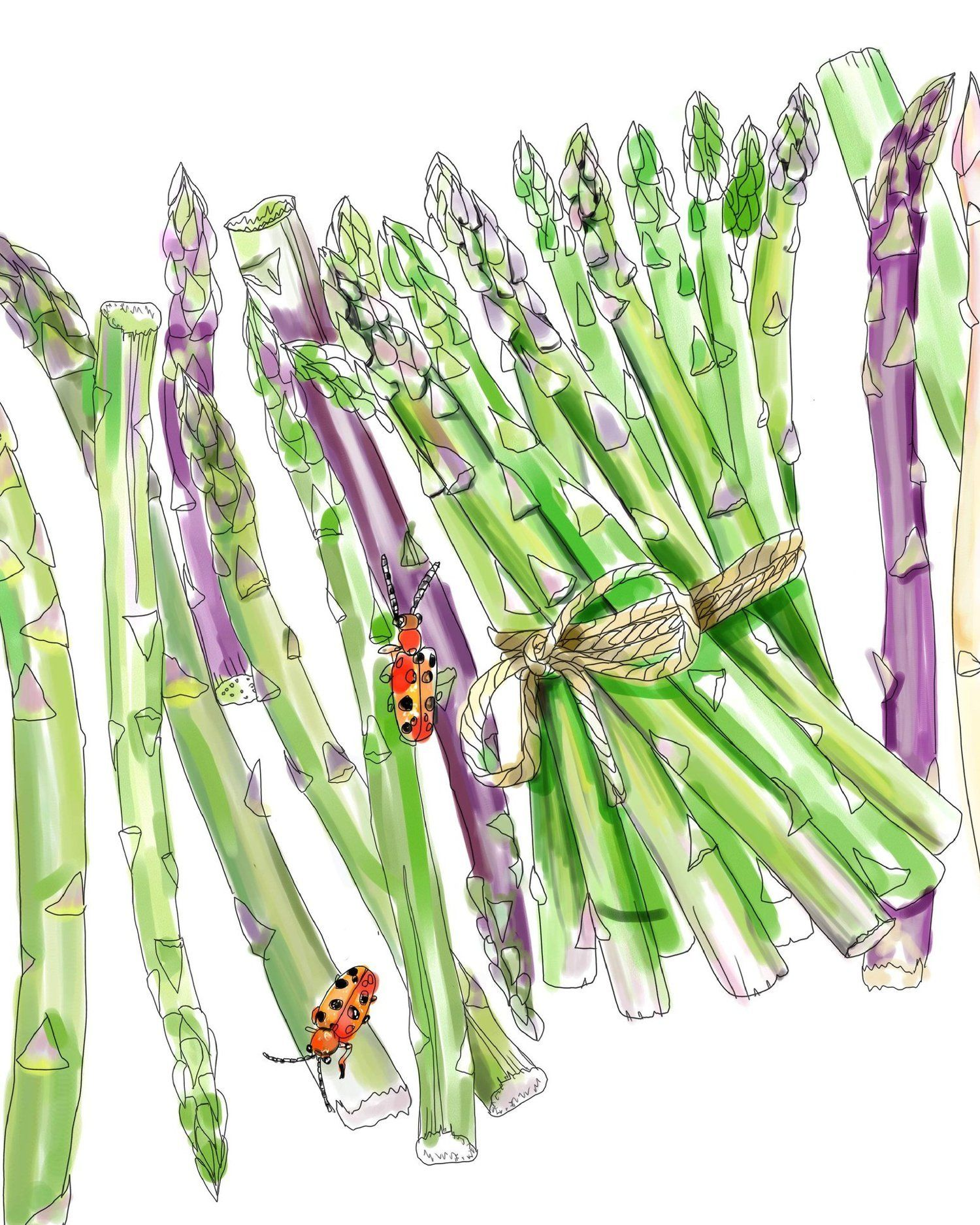 A Printable Adult Coloring Page for Asparagus Lovers | Adult ...