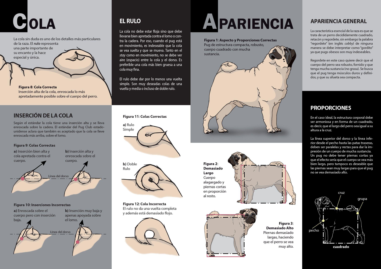 Estándar Ilustrado De La Raza Pug Pug Illustrated Standard