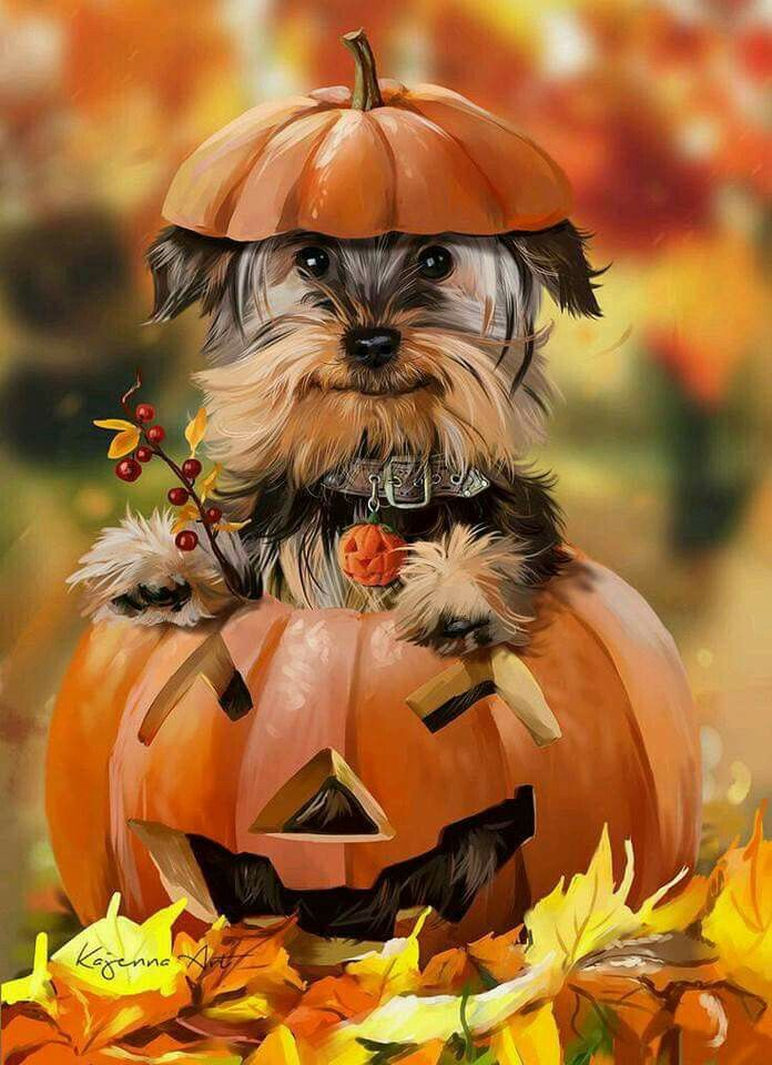 How this for a little stuffed pumpkin? Pretty darn cute