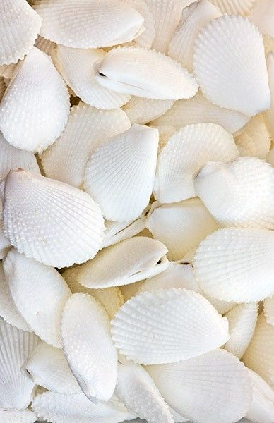 Without a care - Seashells #purewhite