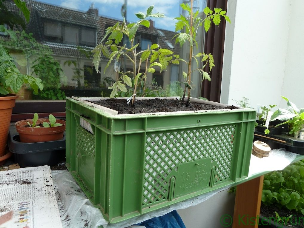 Urban Gardening Anleitung zum Kisten bepflanzen Kistengrün blog - pflanzen topfen kubeln terrasse